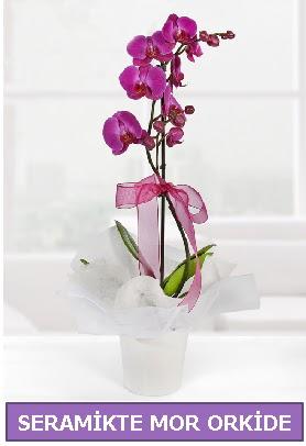 Seramik içerisinde birinci kalite tek dallı mor orkide  Kıbrıs çiçek yolla