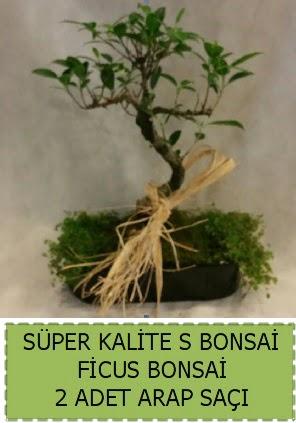 Ficus S Bonsai ve arap saçı  Kıbrıs çiçek , çiçekçi , çiçekçilik