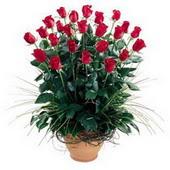 Kıbrıs anneler günü çiçek yolla  10 adet kirmizi gül cam yada mika vazo