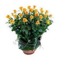 Kıbrıs 14 şubat sevgililer günü çiçek  10 adet sari gül tanzim cam yada mika vazoda çiçek