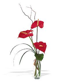 Kıbrıs çiçekçiler  cam yada mika Vazoda 3 adet  antoryum