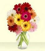 Kıbrıs çiçek gönderme sitemiz güvenlidir  cam yada mika vazoda 15 özel gerbera