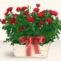 Kıbrıs çiçek yolla  11 adet kirmizi gül sepette