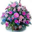 karisik mevsim kir çiçekleri  Kıbrıs çiçek gönderme