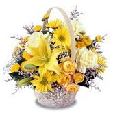 sadece sari çiçek sepeti   Kıbrıs çiçek gönderme
