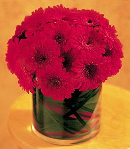 Kıbrıs çiçekçi mağazası  23 adet gerbera çiçegi sade ve sik cam içerisinde