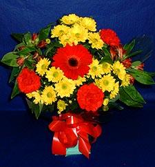Kıbrıs çiçekçi mağazası  sade hos orta boy karisik demet çiçek