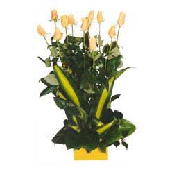 12 adet beyaz gül aranjmani  Kıbrıs yurtiçi ve yurtdışı çiçek siparişi