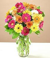Kıbrıs çiçek mağazası , çiçekçi adresleri  17 adet karisik gerbera