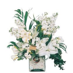 Kıbrıs online çiçek gönderme sipariş  sadece beyazlardan olusmus mevsim cam yada mika tanzim