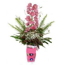 Kıbrıs çiçek siparişi sitesi  cam yada mika vazo içerisinde tek dal orkide çiçegi