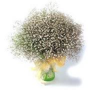 Kıbrıs güvenli kaliteli hızlı çiçek  cam yada mika vazo içerisinde cipsofilya demeti