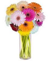 Kıbrıs online çiçek gönderme sipariş  Farkli renklerde 15 adet gerbera çiçegi