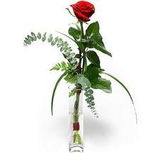 Kıbrıs hediye sevgilime hediye çiçek  Sana deger veriyorum bir adet gül cam yada mika vazoda