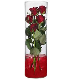 cam içerisinde 7 adet kirmizi gül  Kıbrıs çiçek siparişi vermek
