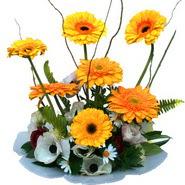 camda gerbera ve mis kokulu kir çiçekleri  Kıbrıs çiçek , çiçekçi , çiçekçilik