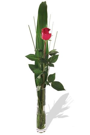 1 adet cam vazo içerisinde kirmizi gül  Kıbrıs hediye çiçek yolla