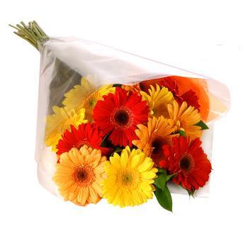 Karisik renklerde gerbera buketi  Kıbrıs 14 şubat sevgililer günü çiçek