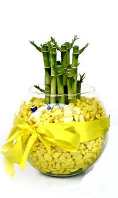 cam fanus içerisinde bambo  Kıbrıs internetten çiçek siparişi