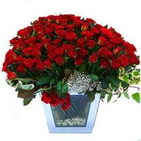 Kıbrıs çiçek siparişi vermek   101 adet kirmizi gül aranjmani