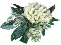 Kıbrıs online çiçek gönderme sipariş  9 Beyaz gül Özel kisiler için