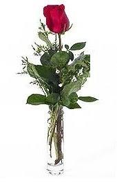 Vazo içerisinde 1 adet kirmizi gül  Kıbrıs 14 şubat sevgililer günü çiçek