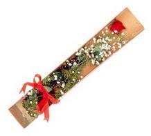 1 adet kirmizi gül  Kıbrıs çiçek , çiçekçi , çiçekçilik