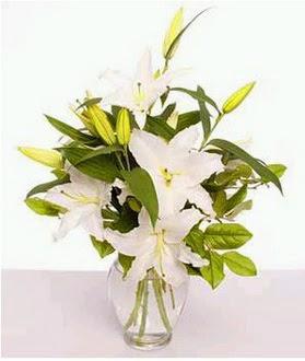 Kıbrıs çiçek satışı  2 dal cazablanca vazo çiçeği