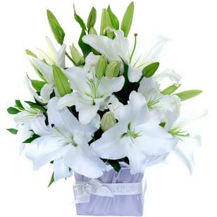 Kıbrıs çiçekçi telefonları  2 dal cazablanca vazo çiçeği