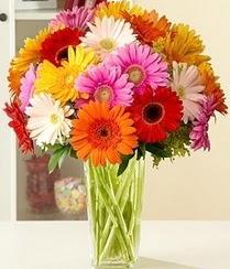 Kıbrıs kaliteli taze ve ucuz çiçekler  15 adet gerbera çiçek vazosu