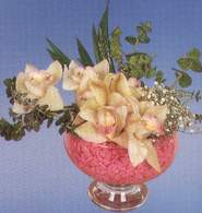 Kıbrıs güvenli kaliteli hızlı çiçek  Dal orkide kalite bir hediye