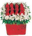 Kıbrıs çiçek satışı  Kare cam yada mika içinde kirmizi güller - anneler günü seçimi özel çiçek