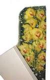 Kıbrıs çiçek satışı  Kutu içerisine dal cymbidium orkide