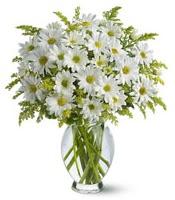 Vazo içerisinde beyaz krizantem çiçekleri  Kıbrıs internetten çiçek satışı