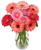vazo içerisinde 13 adet gerbera çiçeği  Kıbrıs çiçekçiler