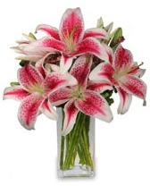 Vazo içerisinde 5 dal kazablanka çiçeği  Kıbrıs 14 şubat sevgililer günü çiçek