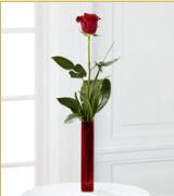 Vazo içerisinde 1 adet kırmızı gül  Kıbrıs online çiçek gönderme sipariş