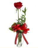vazo içerisinde 1 adet kırmızı gül  Kıbrıs çiçek , çiçekçi , çiçekçilik