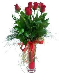vazo içerisinde 5 kırmızı gül  Kıbrıs online çiçekçi , çiçek siparişi