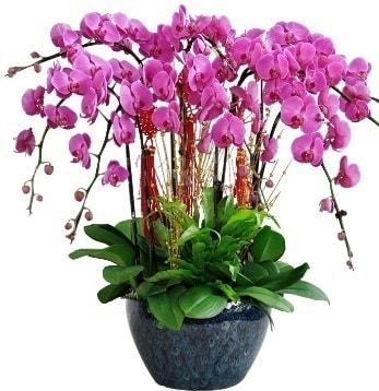9 dallı mor orkide  Kıbrıs hediye sevgilime hediye çiçek