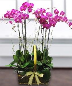 4 dallı mor orkide  Kıbrıs online çiçekçi , çiçek siparişi