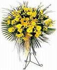 Kıbrıs çiçek yolla , çiçek gönder , çiçekçi   Sari kazablanka Ferforje