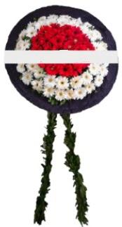 mozele çiçeği  Kıbrıs çiçek servisi , çiçekçi adresleri