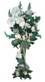 Kıbrıs güvenli kaliteli hızlı çiçek  antoryumlarin büyüsü özel