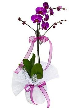 Tek dallı mor orkide  Kıbrıs çiçek , çiçekçi , çiçekçilik