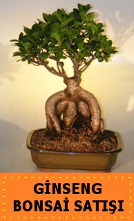 Ginseng bonsai satışı japon ağacı  Kıbrıs uluslararası çiçek gönderme