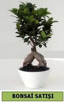 Bonsai japon ağacı satışı  Kıbrıs kaliteli taze ve ucuz çiçekler