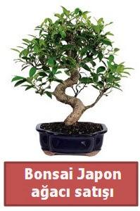 Japon ağacı bonsai satışı  Kıbrıs çiçekçiler