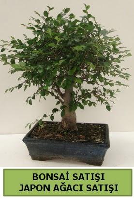 Minyatür bonsai japon ağacı satışı  Kıbrıs çiçek gönderme