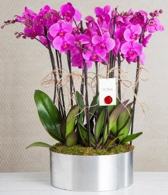 11 dallı mor orkide metal vazoda  Kıbrıs çiçek gönderme